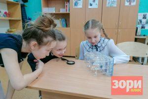 Что исследуют школьники Добрянского округа?