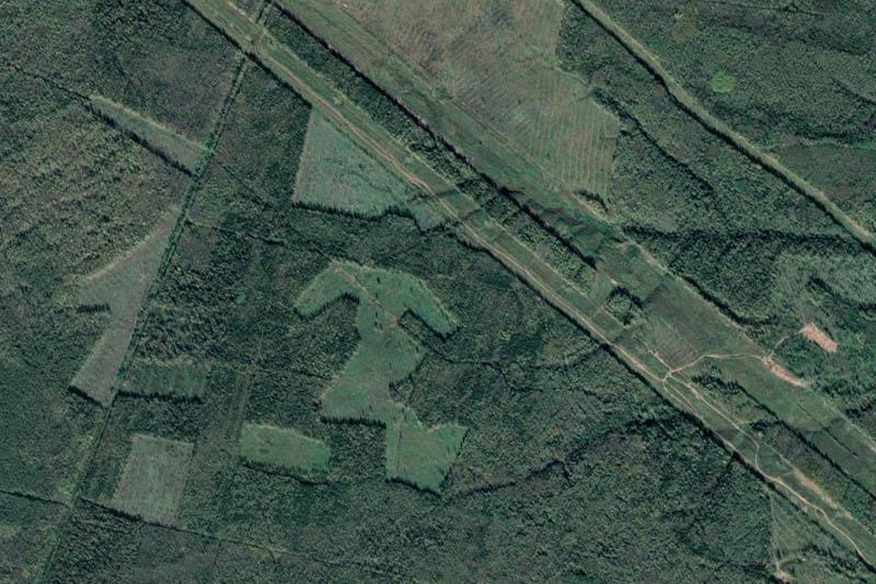 Более 20% объёма незаконной рубки в Пермском крае выявлено космическим мониторингом