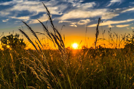 Фермеры Прикамья смогут получить финансовую поддержку