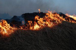 Пылающая угроза: в Добрянском округе горят бесхозные строения и трава