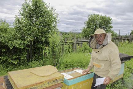 В глубинку заманили пчёлы