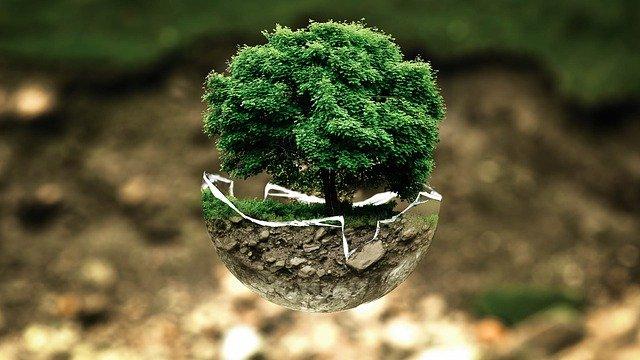 Волнуют ли вас проблемы экологии?
